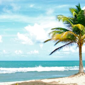Single palm tree in sand in front of a beach.