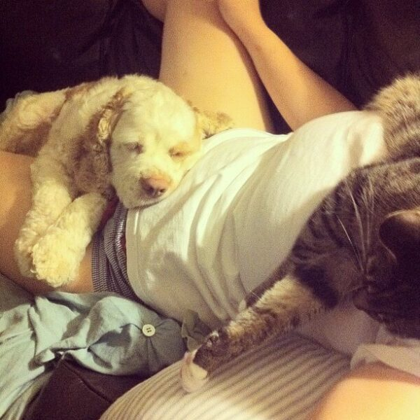 A dog and cat laying on a person