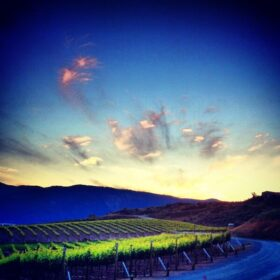 Image of a vineyard at sunset with mountains in the back ground