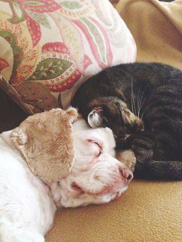 Brody & Benny