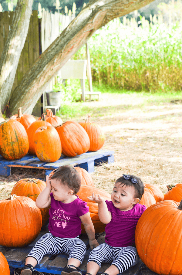 Ellie & Lyla take on the Pumpkin Patch!