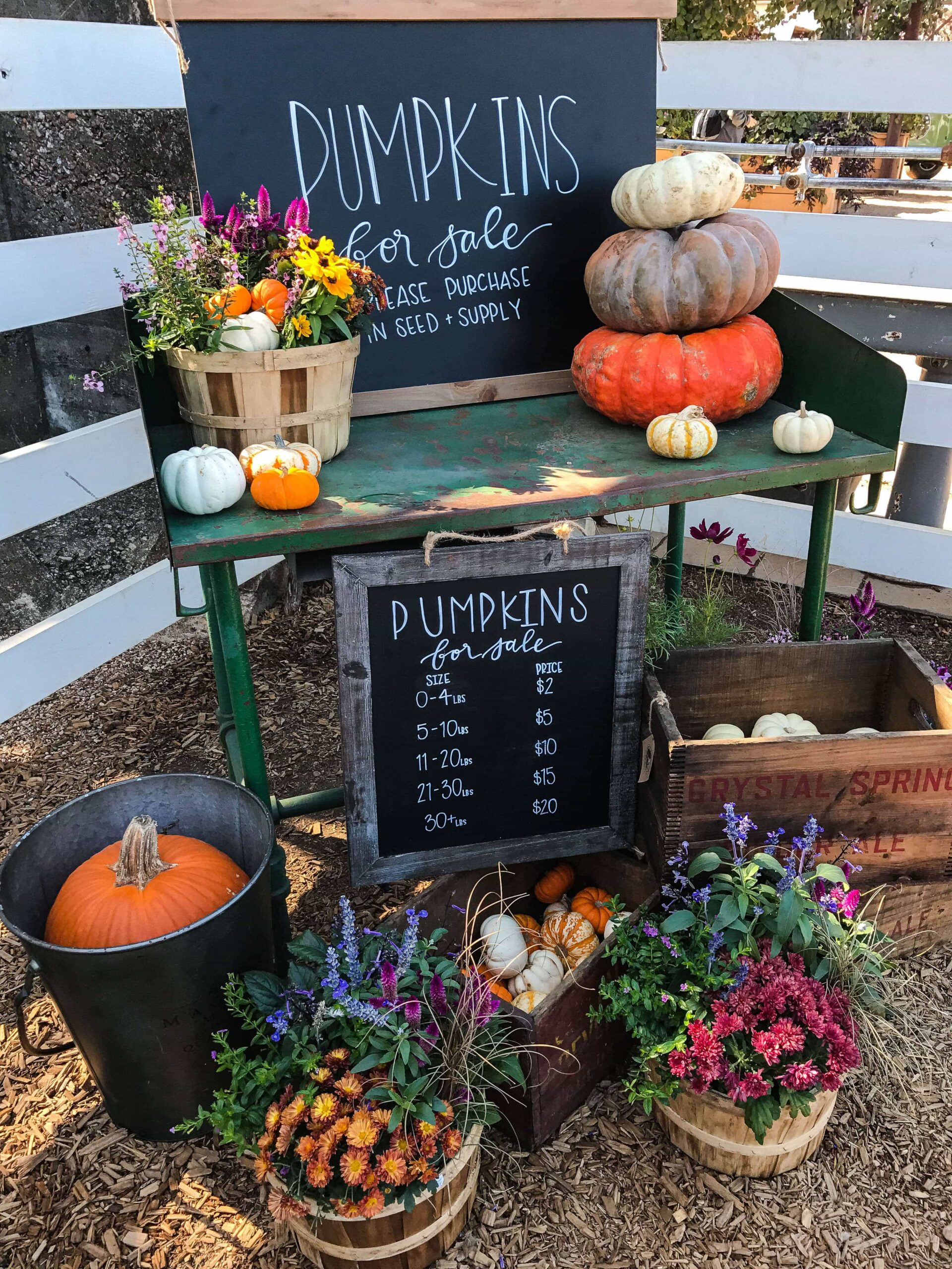 A Pumpkin Stand with Signs Indicating that the Pumpkins are For Sale
