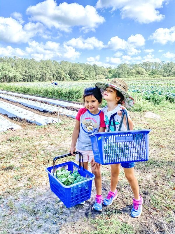 two kids picking vegetables on a farm.